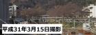 桜の開花状況(3/15更新)