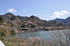 丹沢湖周辺のヤマザクラが見頃です。