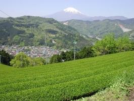 (株)神奈川県農協茶業センター直売所