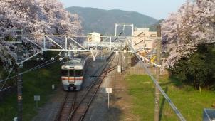 桜の御殿場線