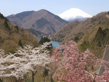 丹沢湖の春
