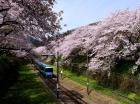 第47回やまきた桜まつり中止のお知らせ