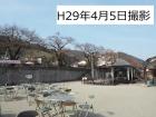 桜開花状況(4/5更新)