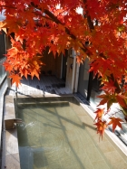 中川周辺の紅葉写真(12月1日時点)