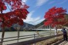丹沢湖周辺の紅葉情報です。