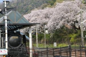 満開の桜とSL
