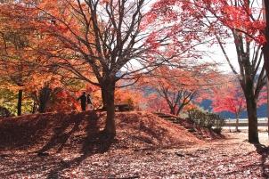 園地の紅葉
