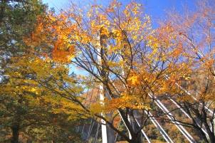 斜張橋の秋