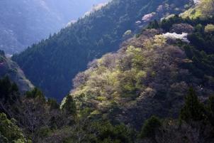山間の新緑