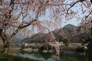 丹沢湖春の学び舎
