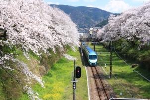 桜の中走る