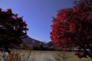 富士を仰ぐ丹沢湖の紅葉