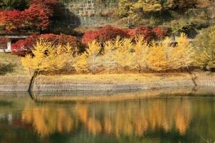 黄葉の行列