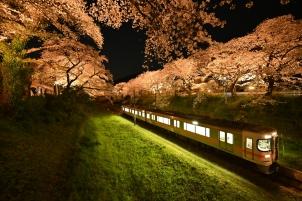 夜桜に誘われて