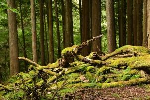 森の奥深く