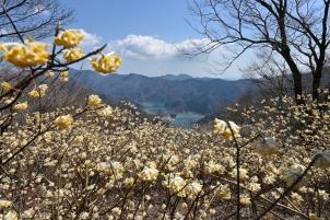 金色の丹沢湖