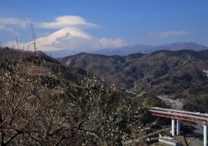 梅花香る里山