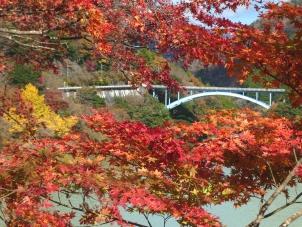 紅葉と中川橋