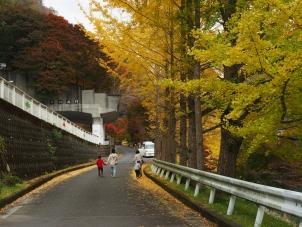 丹沢湖の紅葉風景