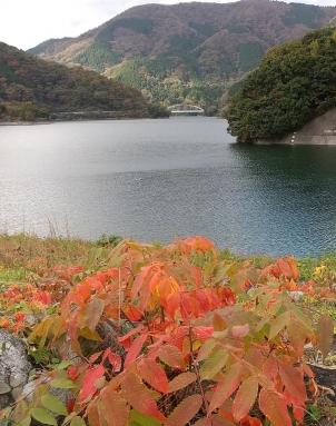 草モミジと丹沢湖