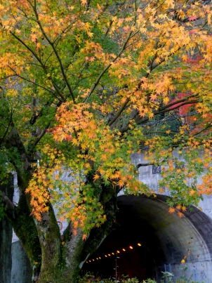 秋の玄倉隧道