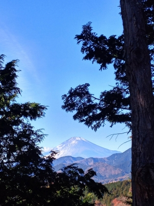 木立越しの富士山