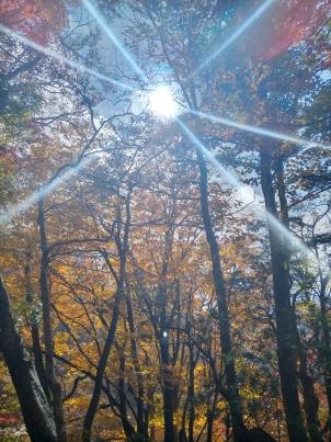 初秋の森林浴