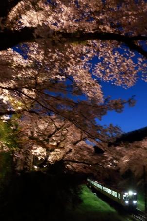 桜色の夜を駆ける