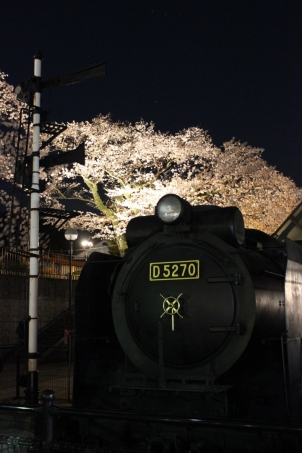 夜桜鉄道D52