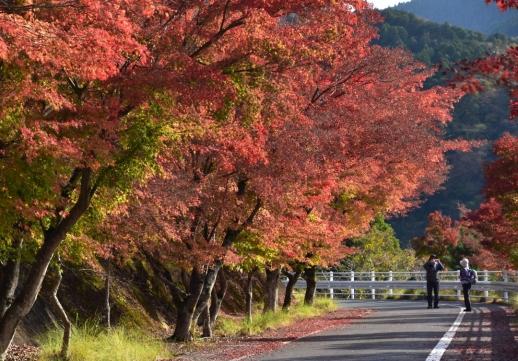 紅葉の丹沢湖畔 園路